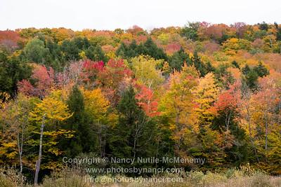 Fall Foliage West Windsor VT