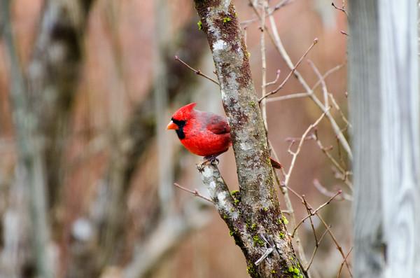 Around the Bird Feeder Fall 2020