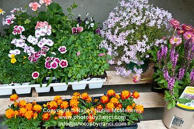 Home and Garden 2012 Copyright ©2012 Nancy Nutile-McMenemy www.photosbynanci.com