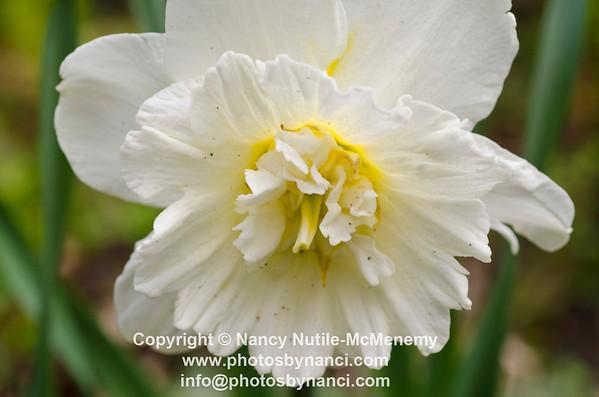 Home and Garden 2012 Copyright ©2012 Nancy Nutile-McMenemy http://www.photosbynanci.com