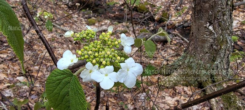 Wildflowers in Weathersfield
