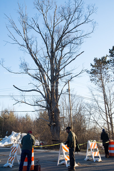 Romaine Tenney Maple Tree Removal