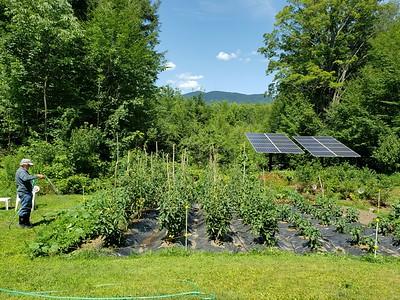 20190801_133521_our garden