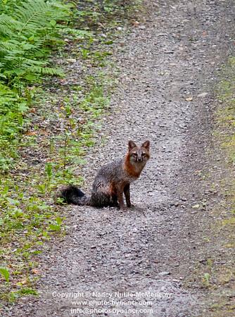 Weathersfield Wildlife