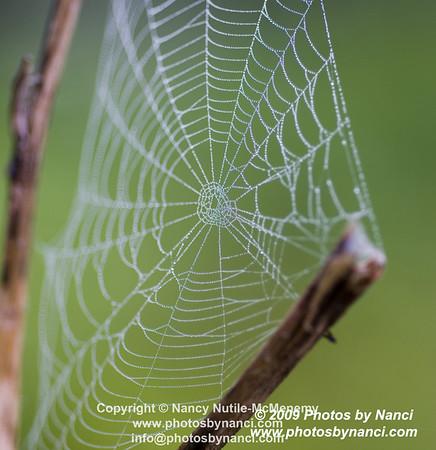 Spider Web  Wildlife Around Weathersfield Weathersfield VT  Copyright ©2009-2012 Nancy Nutile-McMenemy www.photosbynanci.com More Images  http://photosbynanci.smugmug.com