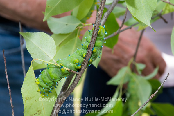 The World of Caterpillars