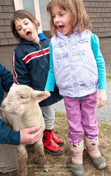 Billings Farm Babies