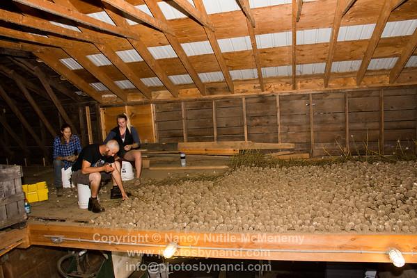Deep Meadows Organic Farm