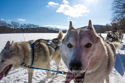 Braeburn Siberian Sled Dogs