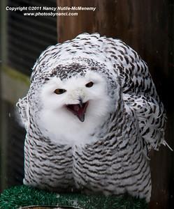 VINS Owl Fest