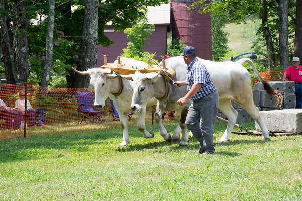 27th Annual Reading Vermont Ox Pull