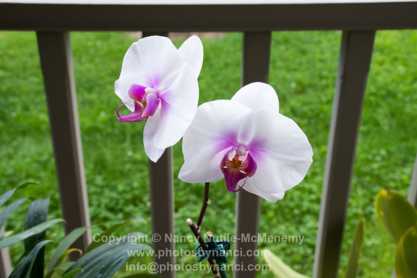 All About Orchids with Kim DeLong