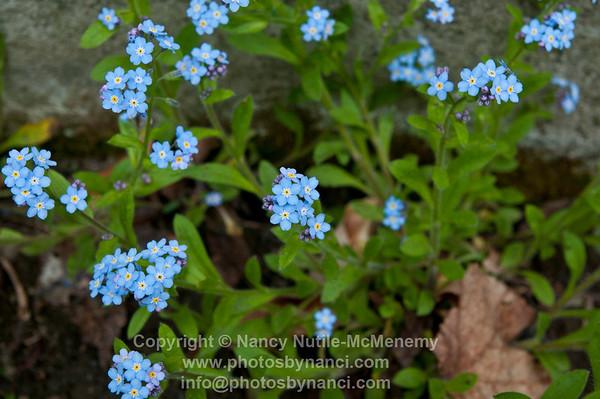 FlowersPBN_9900