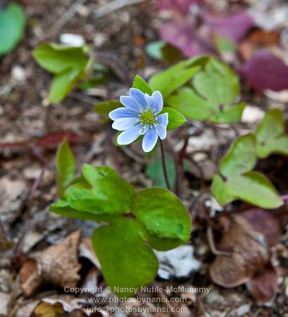 FlowersPBN_9899