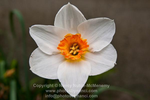 FlowersPBN_9904