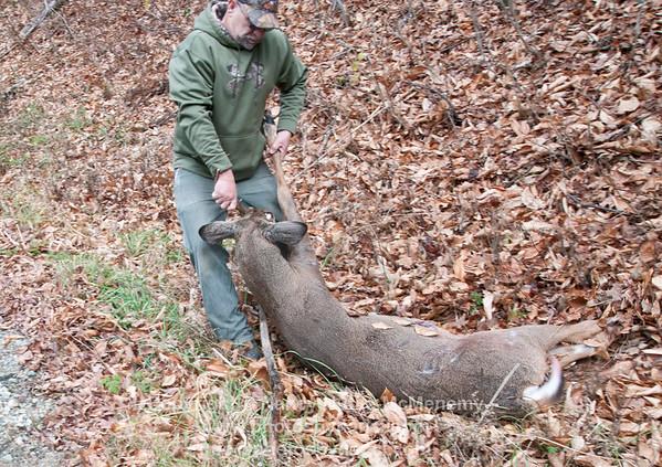 Vehicle Hits Deer in Reading