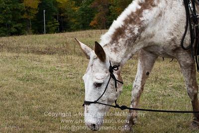 GMHA Fall Foliage Horse Ride