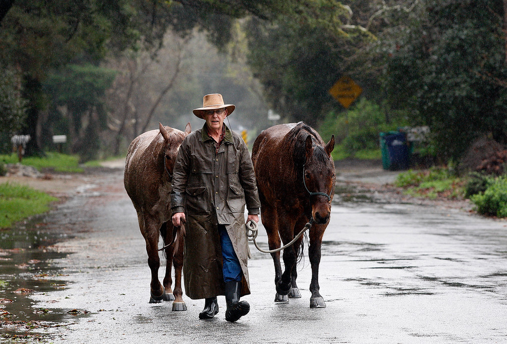 . Carmel Valley resident Chris Harrold moves his horses to higher ground along the Carmel River on Monday, Feb. 20, 2017.  The Carmel River was threatening to flood in several areas due to the persistent rain.  (Vern Fisher - Monterey Herald)