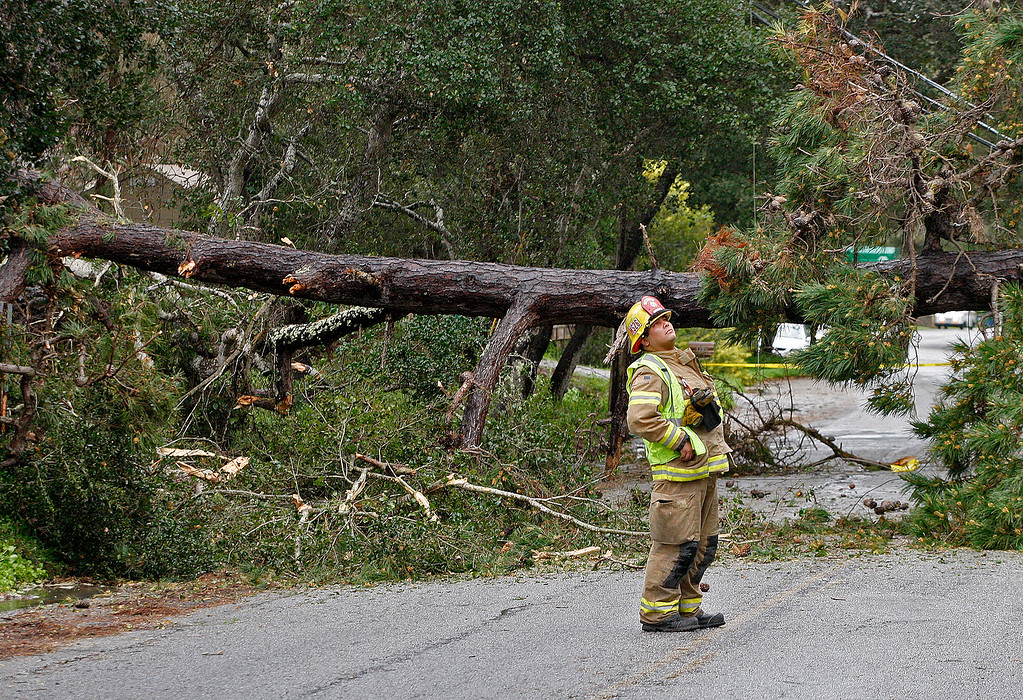 . A large pine tree fell across all lanes of Josselyn Canyon Road on Friday, Feb. 17, 2017.  (Vern Fisher - Monterey Herald)