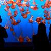 Live 360 degree video at the Aquarium