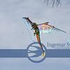 One of John's many kites !