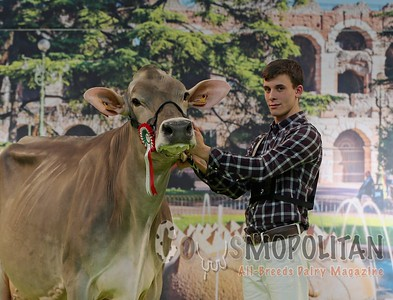 Brown Swiss Cows Verona 2016