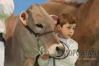 Brown Swiss Heifers Verona 2016