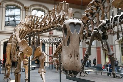 Im Naturkundemuseum gab es unter anderem Dinosaurier zu sehen.