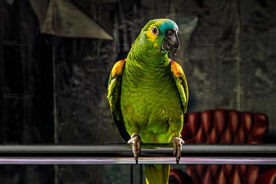 parrot in run down living room