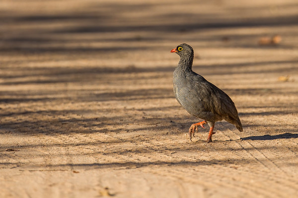 Abu Huab, Kunene Namibia