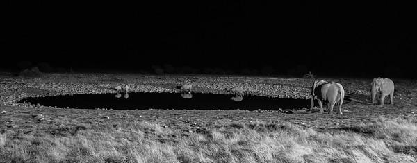 african elephants, Loxodonta africana (Elephantidae) and white rhinoceri, Ceratotherium simum (Rhinoceratidae) visting a water hole at night. Etosha N.P., Oshana Namibia Africa