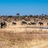 african elephant, <i>Loxodonta africana</i> (Elephantidae). Khaudum N.P., Kavango Namibia Africa