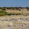Burchell's zebra, <i>Equus quagga burchelli</i> (Equidae). Etosha N.P., Oshikota Namibia Africa