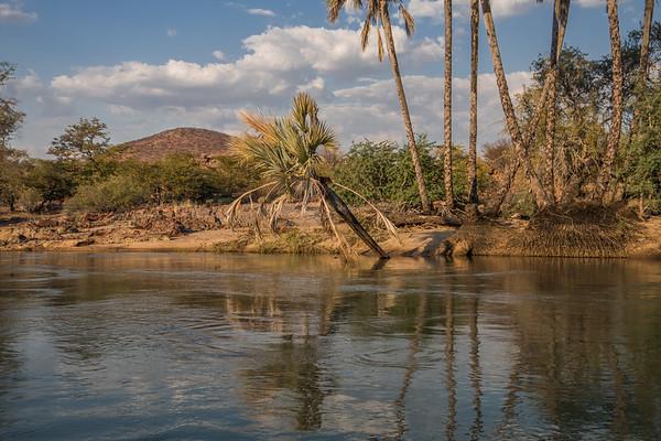 find the nile crocodile, Crocodylus niloticus (Crocodylidae). Epupa, Kunene Namibia