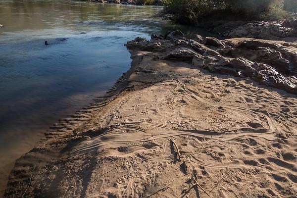 sand track from a nile crocodile, Crocodylus niloticus (Crocodylidae). Epupa, Kunene Namibia