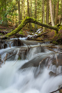 Liberty Creek in Spring