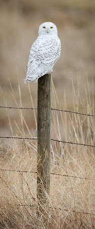 Bird Ghost (Vertical Panorama)