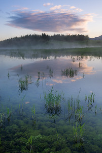 Pond Bliss