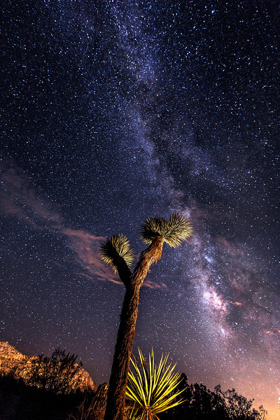 Joshua's Tree