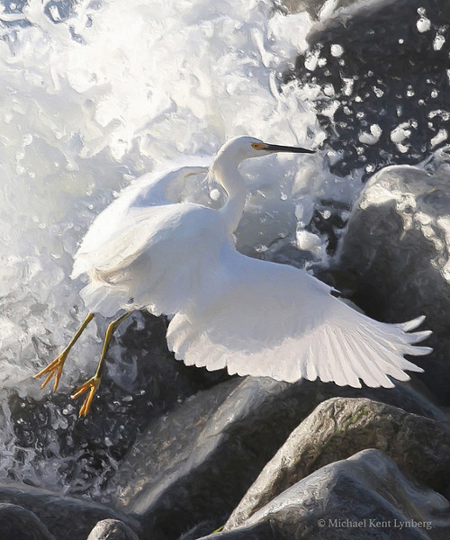 Snowy Egret Rocks (painted version)