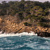 Point Lobos Cypress Grove