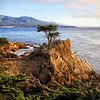 Lone Cypress View