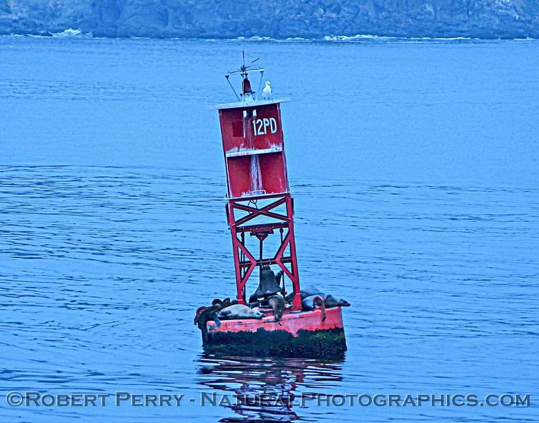 Pt Dume buoy_Sea World_2004-08-16-008
