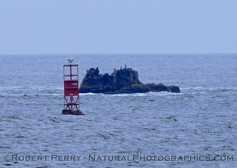 Begg Rock w buoy 2006 09-09 So Calif Bight--444modCROP