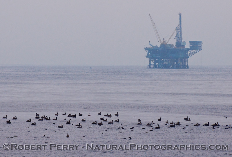 bird line on water Oil Platform in back 2009 09-19 SB Channel c - 006-1