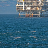 Delphinus capensis & Platform Gilda 2010 12-11 SB Channel - 004-1