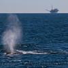 Megaptera novaeangliae spout & Platform in back 2010 11-11 SB Channel - 009-1