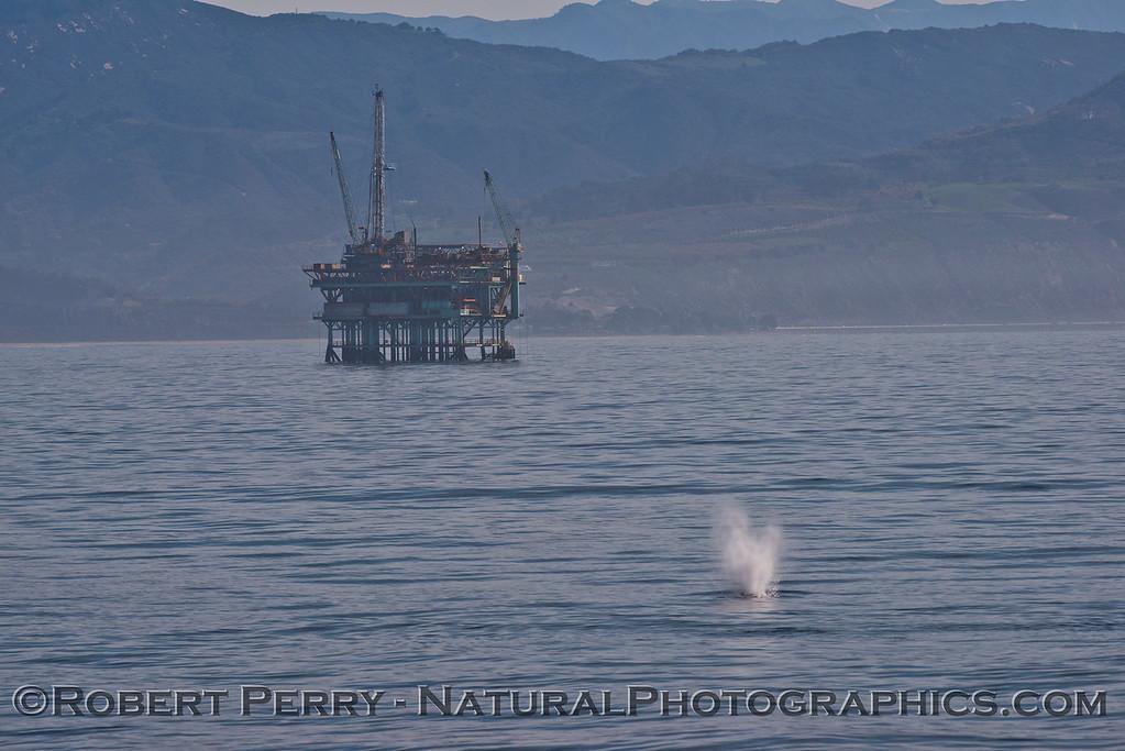 Megaptera novaeangliae & oil platform 2014 04-08 SB Channel-032