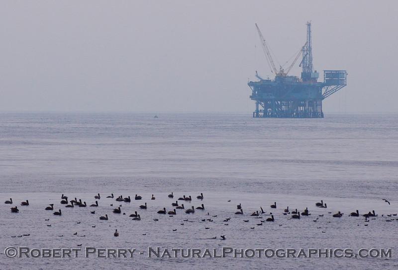 bird line on water Oil Platform in back 2009 09-19 SB Channel c - 006
