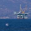 Megaptera novaeangliae spout & Oil platform C 2010 10-31 SB Channel c - 006-1